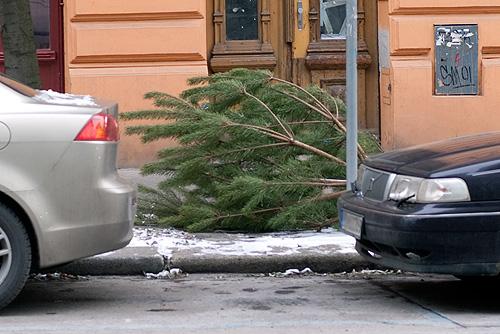 Елки в Чехии выкидывают по правилам. Чехи начали массово выкидывать рождественские елки  Фото: Василий Мазный  7 января 2010