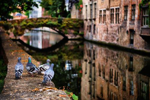 В Праге открывается фотовыставка «Взгляд сквозь объектив на Старый Свет». Фото Павла Башаринова  6 марта 2011