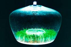 Пражский дизайнер устроила мини-парник в кухонном светильнике. Дизайнерский светильник-парник. Изображение с сайта Membrana.ru  12 октября 2011