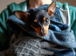 Пражские бездомные смогут бесплатно привить и чипировать своих собак. Все пражские собаки должны быть привиты  Фото: Utro.cz  12 ноября 2018