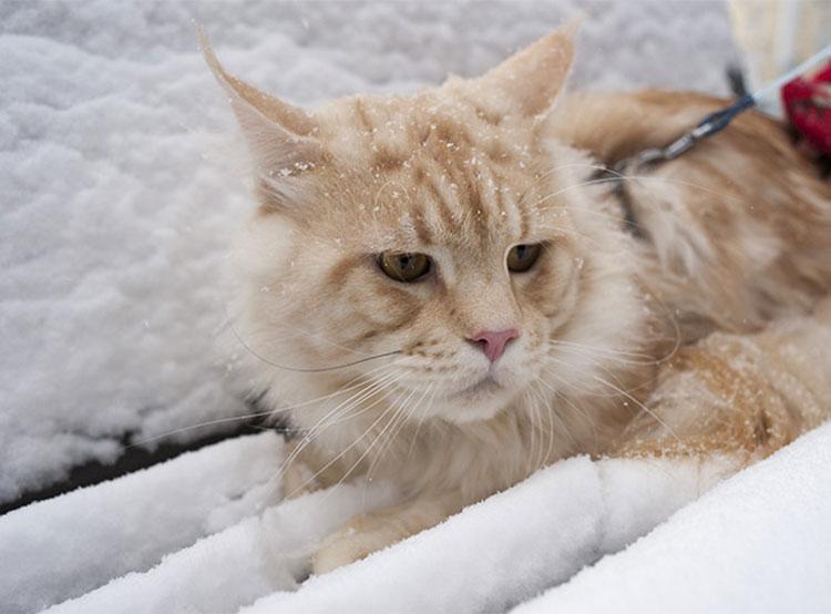 Метеорологи обещают жителям равнинной Чехии снег и гололед. Первый снег в Праге  Фото: Utro.cz  18 ноября 2018 года