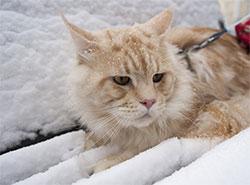 Метеорологи обещают жителям равнинной Чехии снег и гололед. Первый снег в Праге  Фото: Utro.cz  18 ноября 2018