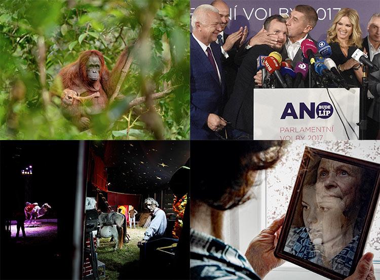 Орангутан, Бабиш и цирк: в Праге выбрали лучшие журналистские фото последнего года. Некоторые из победителей конкурса Czech Press Photo 2018  21 ноября 2018 года