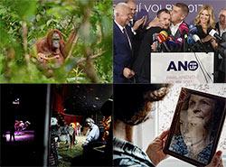 Орангутан, Бабиш и цирк: в Праге выбрали лучшие журналистские фото последнего года. Некоторые из победителей конкурса Czech Press Photo 2018  21 ноября 2018
