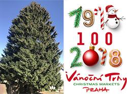 Главную рождественскую ель уже срубили и отправили в Прагу. Елка уже отправилась на Староместскую площадь  25 ноября 2018