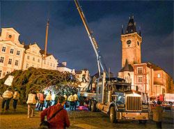 Главная елка Праги прибыла на Староместскую площадь под покровом ночи. Ель прибыла на Староместскую площадь. Фото из фейсбука Trhy Praha/Prague Markets  27 ноября 2018