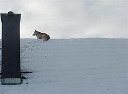 Чешские пожарные сняли с крыши дома большого пса. Фото HZS ČR  8 января 2019