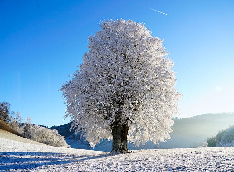 До конца января в Чехии ожидается умеренно теплая сырая погода. Морозы придут в Чехию в феврале. Фото pixabay.com  13 января 2019 года