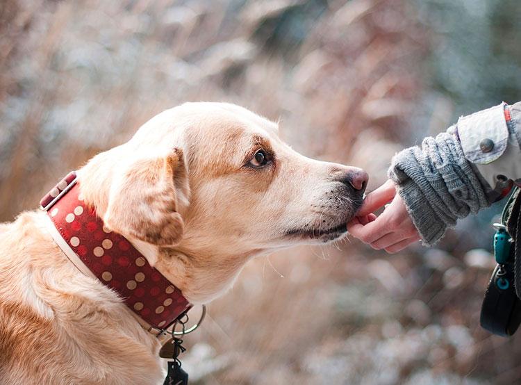 Среднестатистическая пражская собака — дворняга по имени Бен. В Праге зарегистрировано более 80 тысяч собак. Фото Pixabay.com  2 февраля 2019 года
