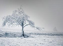 Снегопад оставил жителей Чехии без электричества.  В Чехии - сильные снегопады. Фото Pixabay.com.  3 февраля 2019
