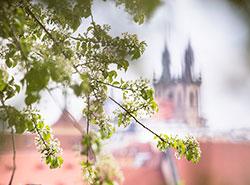 Долгосрочный прогноз обещает Чехии теплый и умеренно дождливый март. В Праге скоро начнется настоящая весна. Фото Pixabay.com  24 февраля 2019