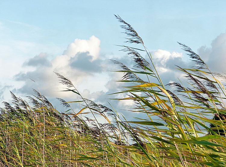 Чешские пожарные дали советы, как вести себя при сильном ветре. Чехии снова обещают сильный ветер. Image by Oldiefan on Pixabay   6 марта 2019 года