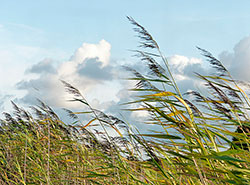 Чешские пожарные дали советы, как вести себя при сильном ветре.  Чехии снова обещают сильный ветер. Image by Oldiefan on Pixabay .  6 марта 2019