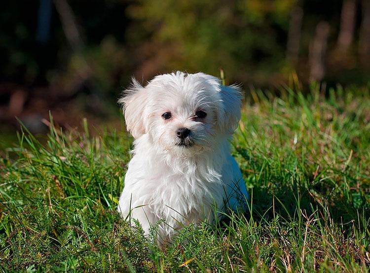 Чешское правительство приняло меры против нелегального разведения собак . Чехия защитит собак на государственном уровне. Image by Pezibear on Pixabay   11 марта 2019 года
