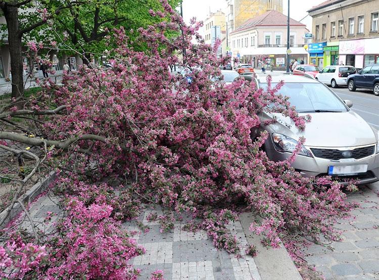 Пражским пожарным пришлось во вторник устранять последствия сильного ветра.  Последствия сильного ветра в Праге. HZS Praha, Oddělení dokumentace, Bc. Roman Půta, 2019.  23 апреля 2019