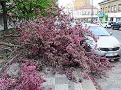 Пражским пожарным пришлось во вторник устранять последствия сильного ветра. Последствия сильного ветра в Праге. HZS Praha, Oddělení dokumentace, Bc. Roman Půta, 2019  23 апреля 2019