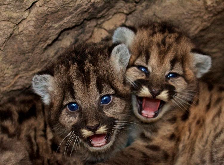 Чешское правительство запретило контактные зоопарки. Контактные зоопарки в Чехии окажутся вне закона. Image by skeeze from Pixabay   27 мая 2019 года