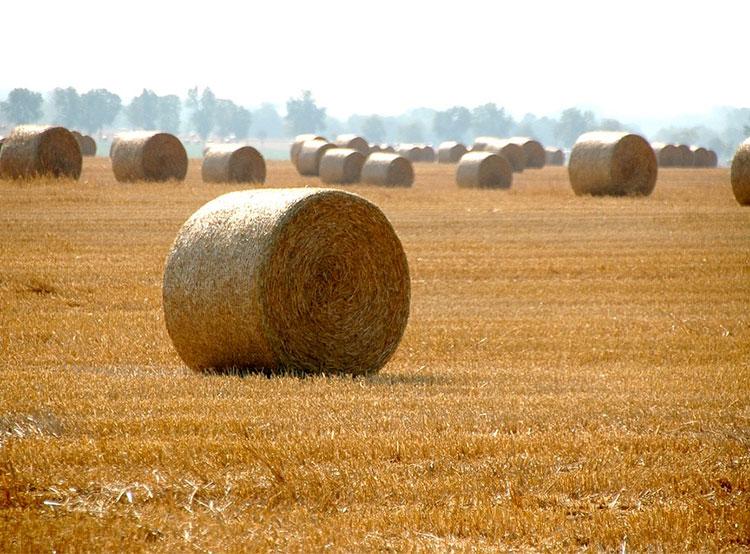 Высокие технологии помогли полиции вернуть чешскому фермеру украденное сено. С луга украли сразу восемь стогов  9 июля 2019