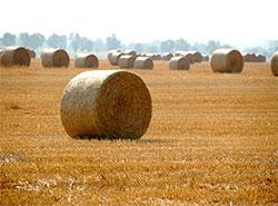 Высокие технологии помогли полиции вернуть чешскому фермеру украденное сено.  С луга украли сразу восемь стогов.  9 июля 2019