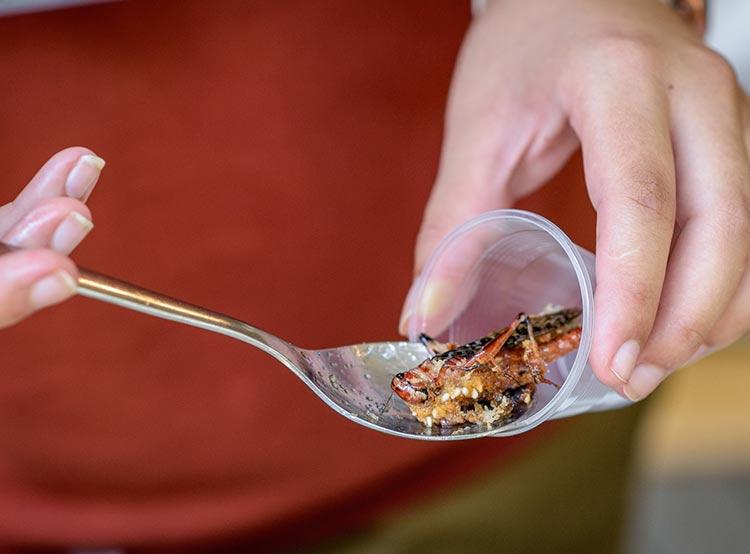 Пражский зоопарк приглашает попробовать насекомых на вкус.  Канапе из саранчи. Фото Petr Hamerník, Zoo Praha.  18 июля 2019