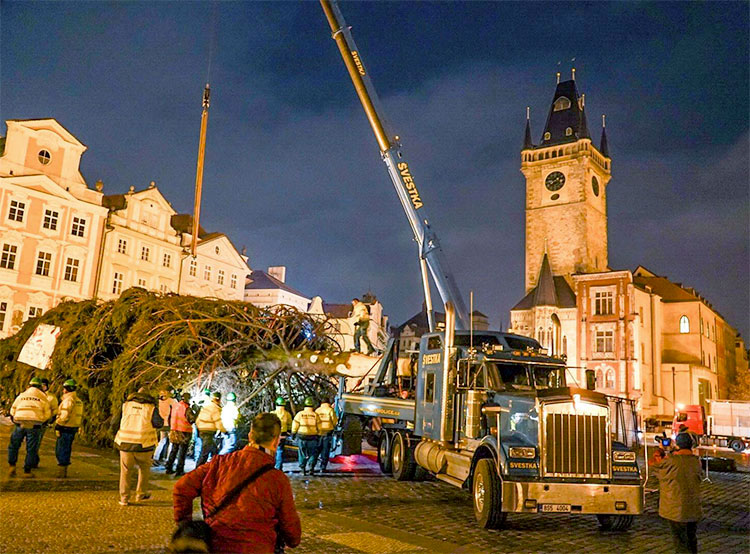 Прага начала подыскивать идеальную рождественскую ель для Староместской площади. Установка ели на Староместской площади в 2018 году. Фото из фейсбука Trhy Praha / Prague Markets  17 августа 2019