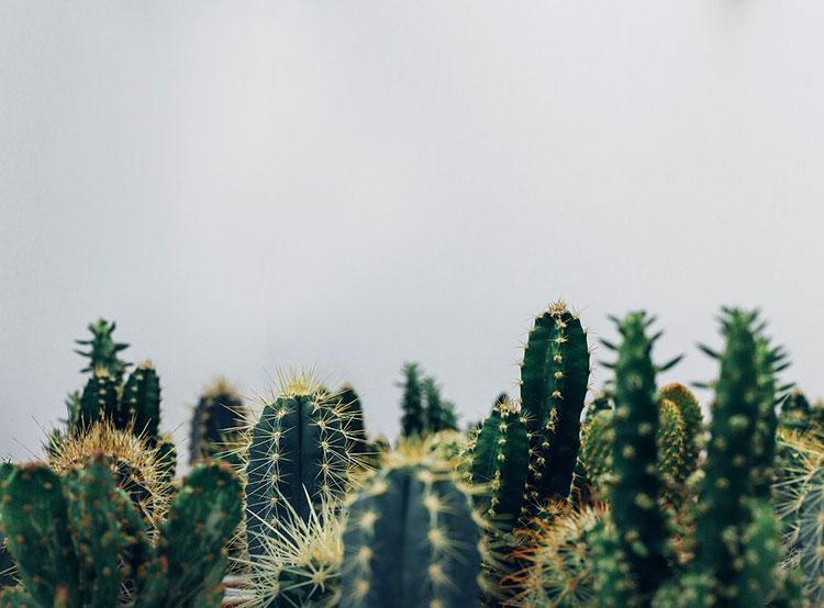 Двоих чехов в ЮАР признали виновными в контрабанде редких кактусов . Чехов приговорили к тюремному заключению за контрабанду кактусов  22 сентября 2019 года