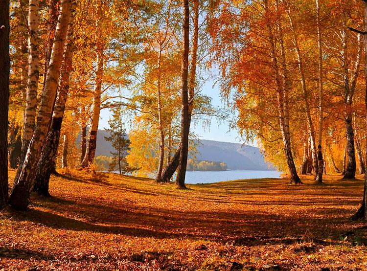 Теплая погода в Чехии продержится еще как минимум неделю. Осень в Чехии продолжит радовать. Image by Larisa Koshkina from Pixabay   19 октября 2019 года